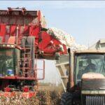dumping California cotton