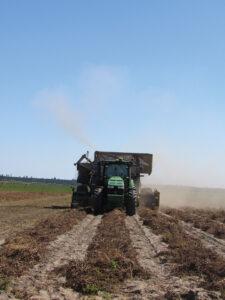 virginia peanut harvest