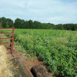 clemson soil test