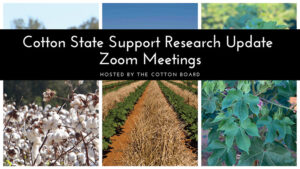 cotton inc. zoom meeting