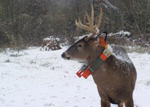 gps tracker on buck