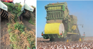 florida cotton and peanut harvest