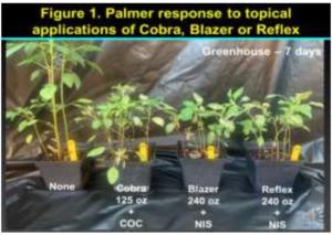 georgia PPO herbicide trial