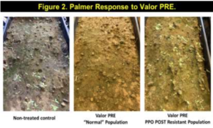 palmer response to valor