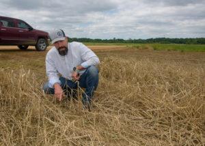 brian Pieralisi examines cotton